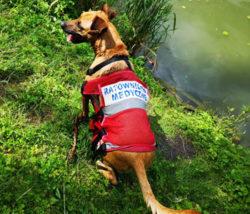 kurs pierwsza pomoc dla zwierzaków