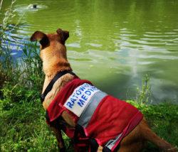 kursy pierwsza pomoc dla zwierząt