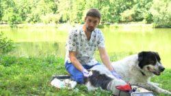 Szkolenia z pierwszej pomocy online dla psów
