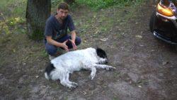 szkolenie z pierwszej pomocy psom