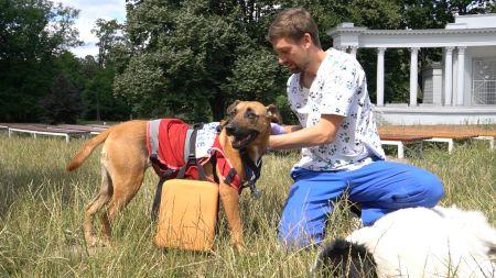 kurs pierwszej pomocy psom